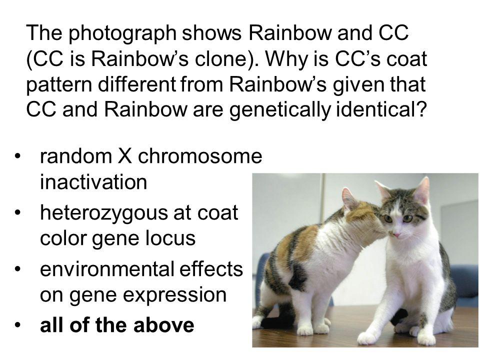 random X chromosome inactivation heterozygous at coat color gene locus
