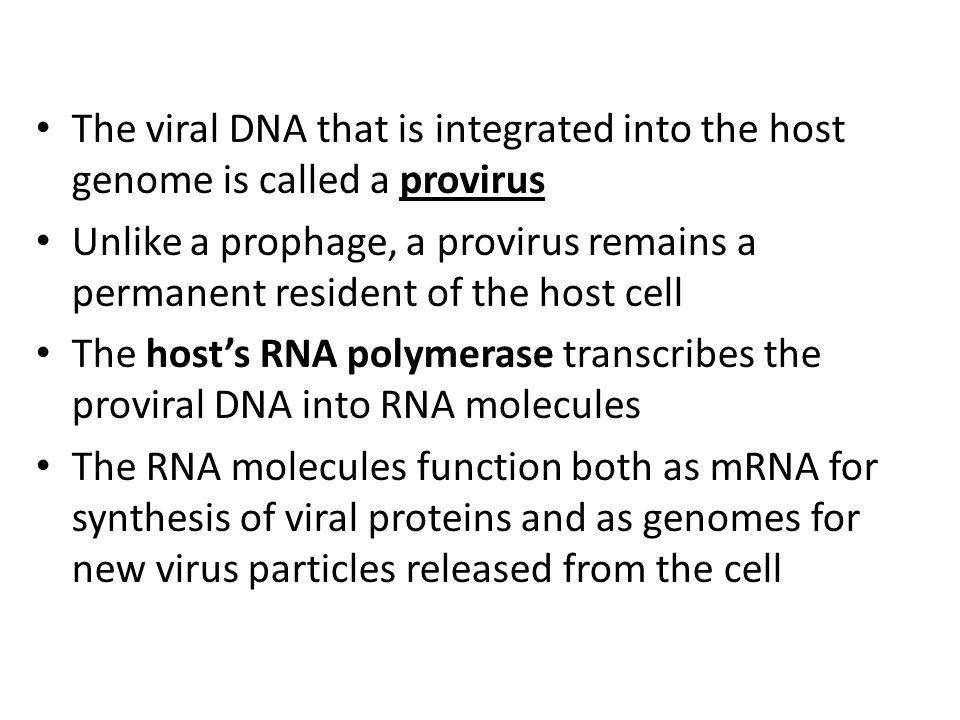 The viral DNA that is integrated into the host genome is called a provirus