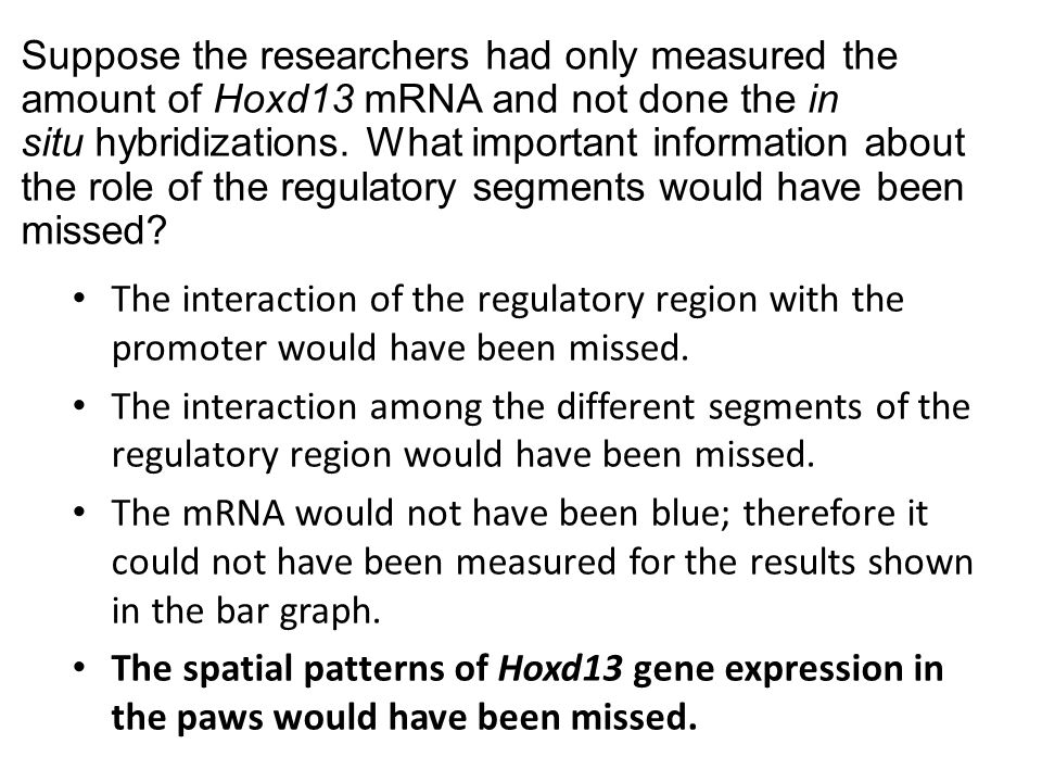 Suppose the researchers had only measured the amount of Hoxd13 mRNA and not done the in situ hybridizations. What important information about the role of the regulatory segments would have been missed