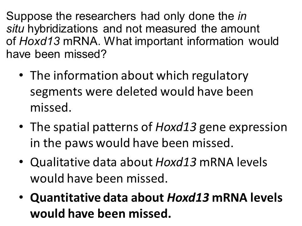Qualitative data about Hoxd13 mRNA levels would have been missed.