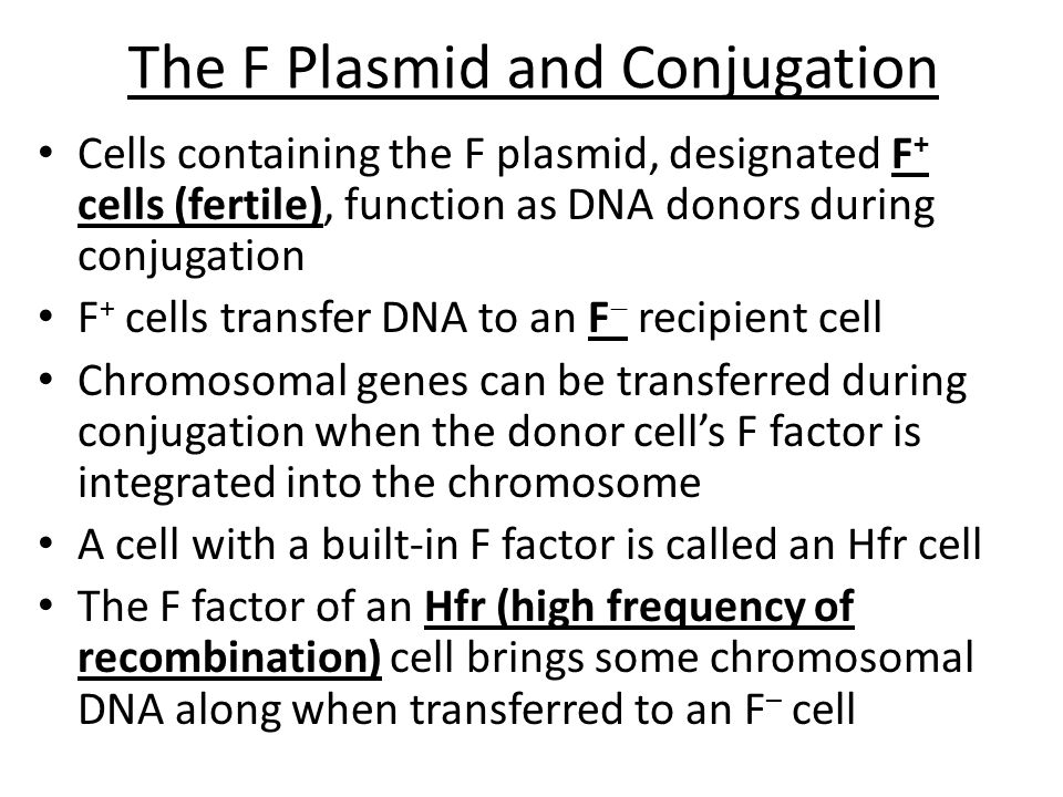 The F Plasmid and Conjugation