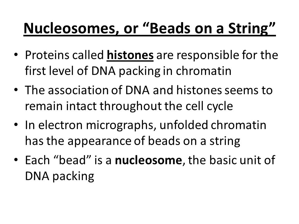 Nucleosomes, or Beads on a String
