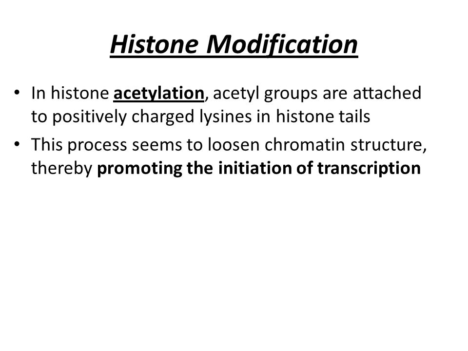 Histone Modification In histone acetylation, acetyl groups are attached to positively charged lysines in histone tails.