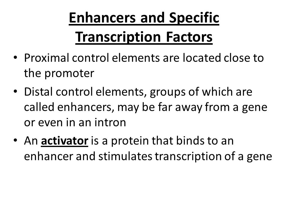 Enhancers and Specific Transcription Factors
