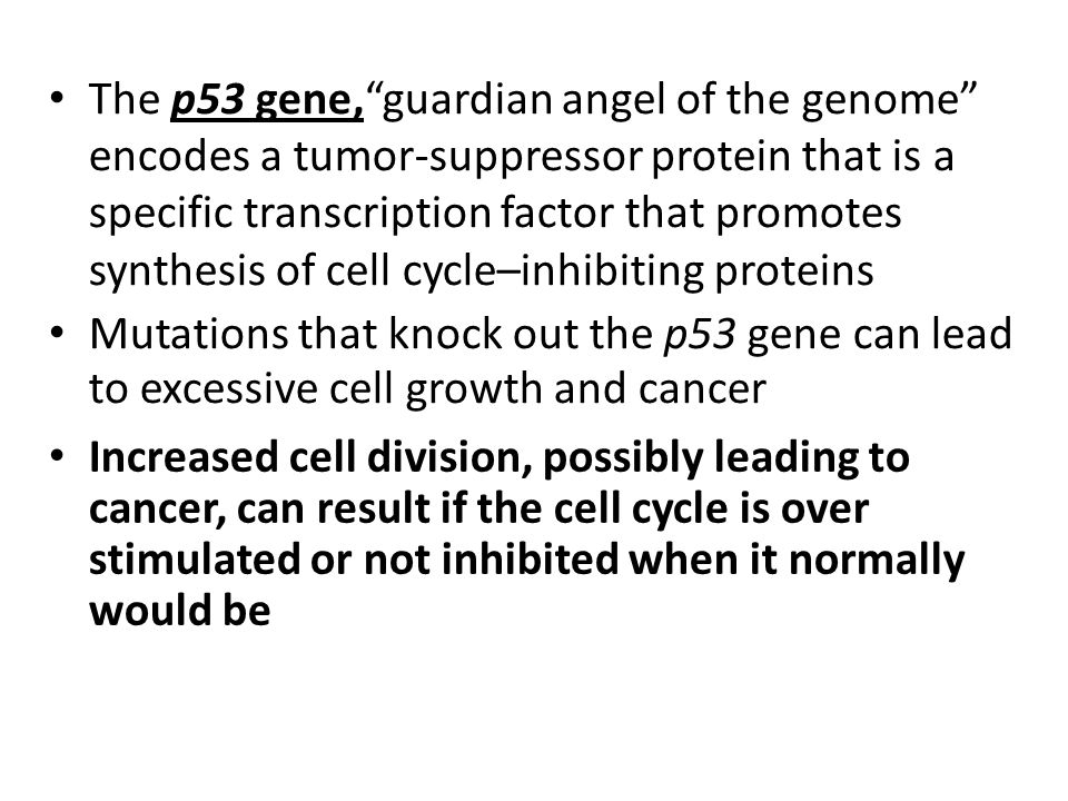 The p53 gene, guardian angel of the genome encodes a tumor-suppressor protein that is a specific transcription factor that promotes synthesis of cell cycle–inhibiting proteins