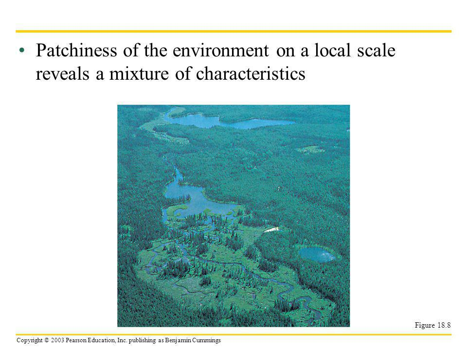 Patchiness of the environment on a local scale reveals a mixture of characteristics