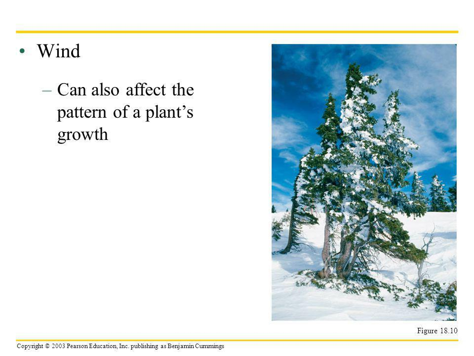 Wind Can also affect the pattern of a plant's growth Figure 18.10