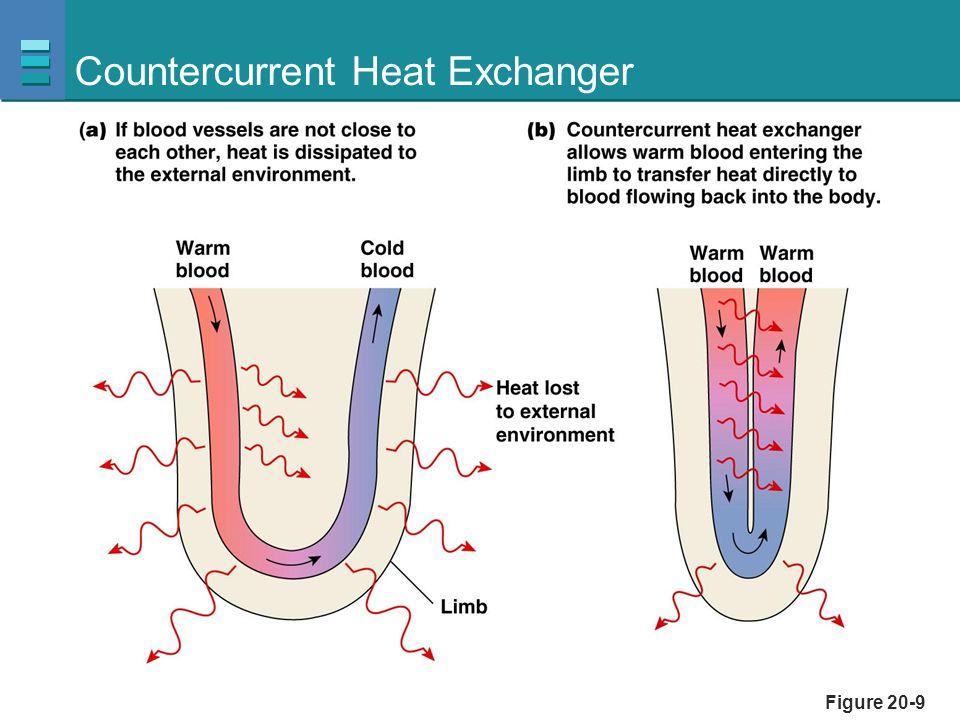 Countercurrent Heat Exchanger