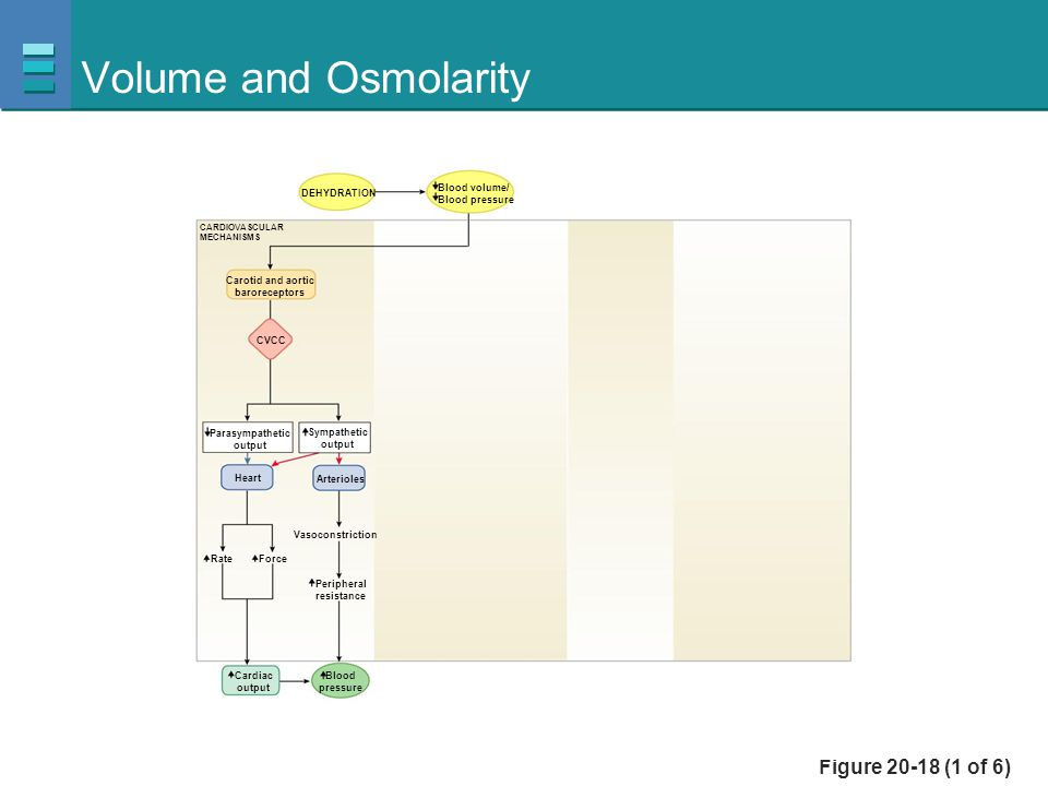 Volume and Osmolarity Figure 20-18 (1 of 6) Blood volume/