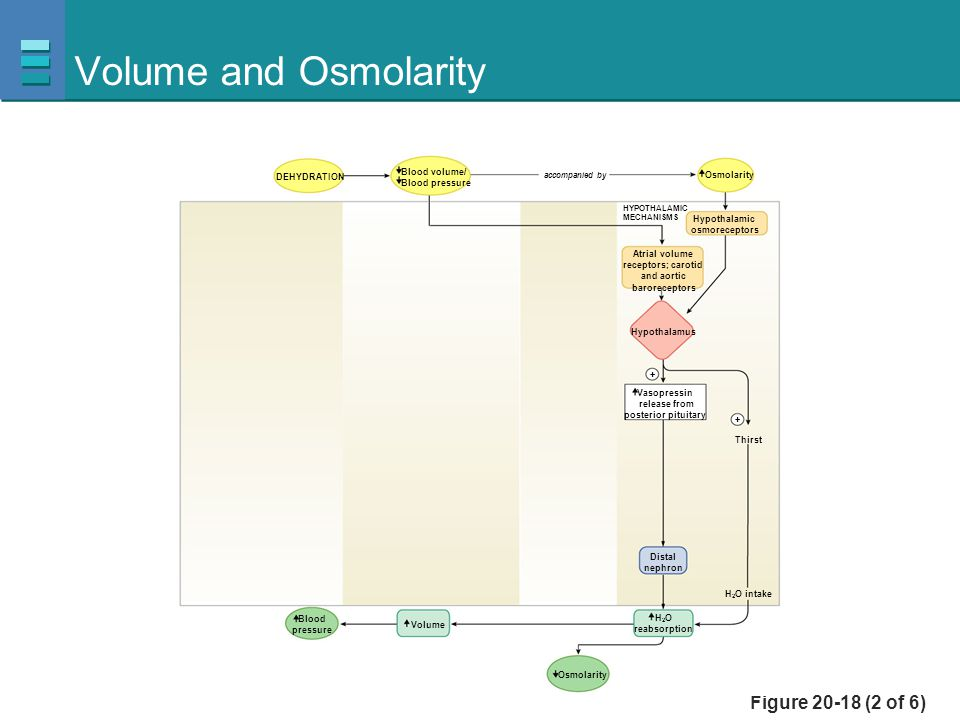 Volume and Osmolarity Figure 20-18 (2 of 6) Blood volume/
