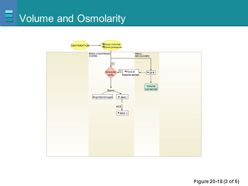 Volume and Osmolarity Figure 20-18 (3 of 6) Blood volume/ DEHYDRATION