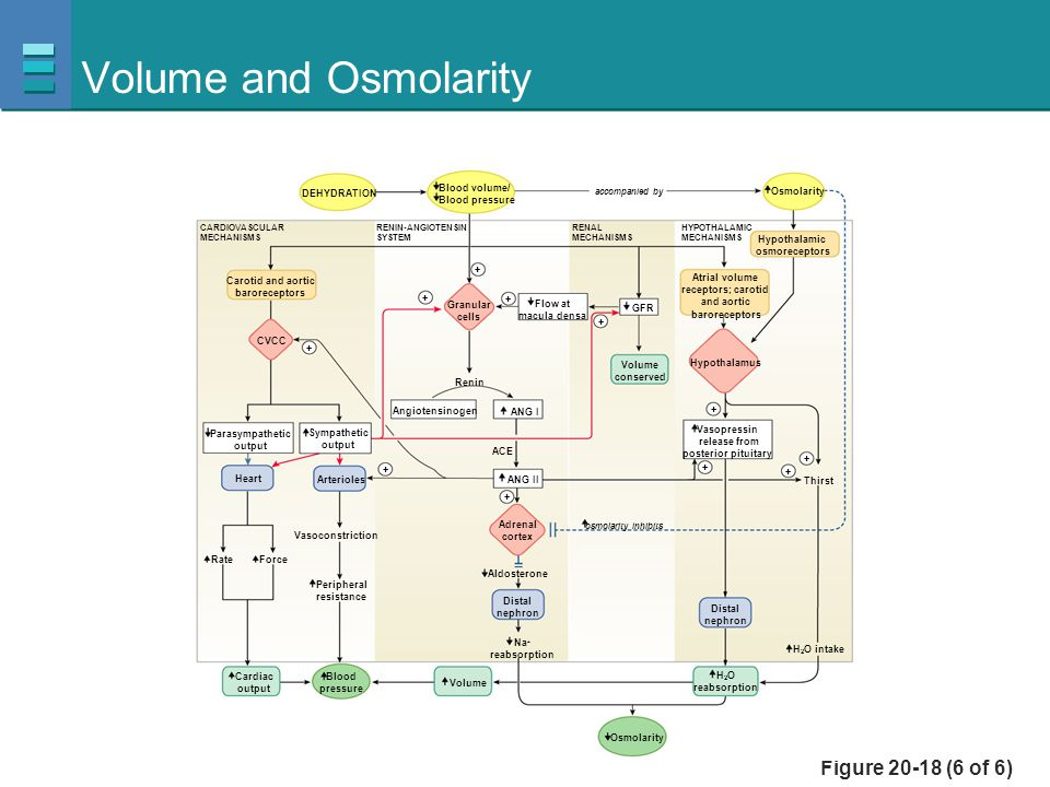 Volume and Osmolarity Figure 20-18 (6 of 6) Blood volume/