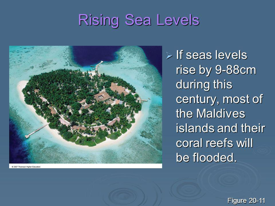 Rising Sea Levels If seas levels rise by 9-88cm during this century, most of the Maldives islands and their coral reefs will be flooded.