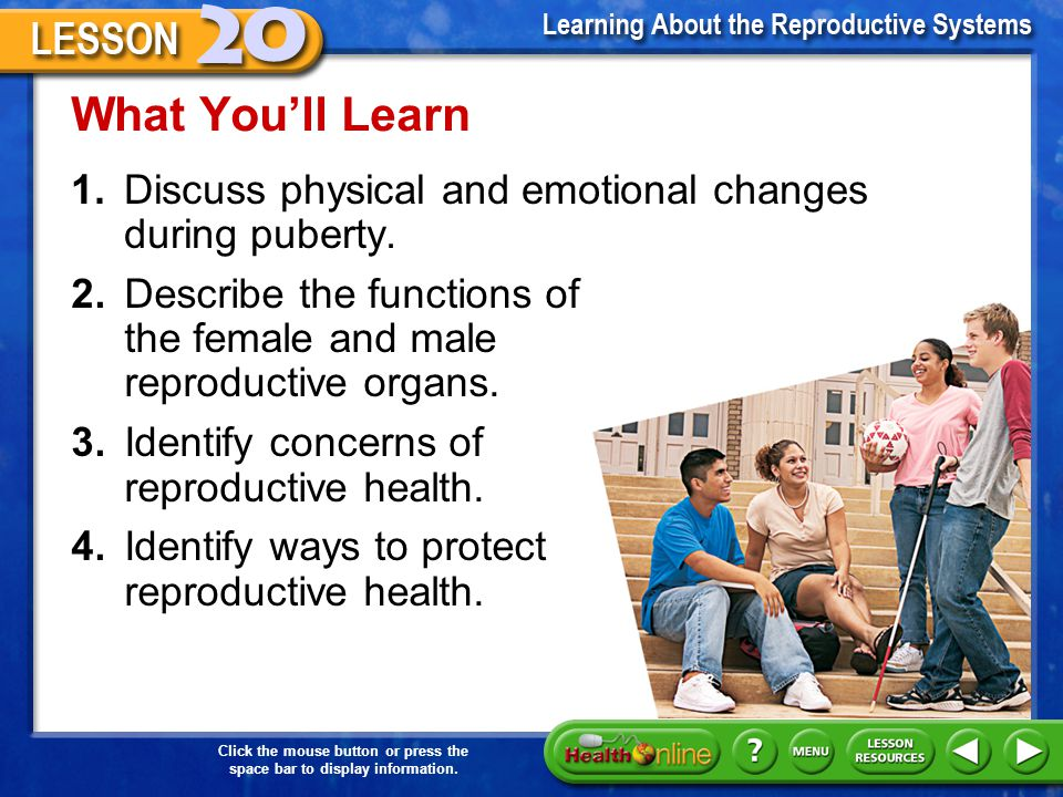 What You'll Learn 1. Discuss physical and emotional changes during puberty. 2. Describe the functions of the female and male reproductive organs.