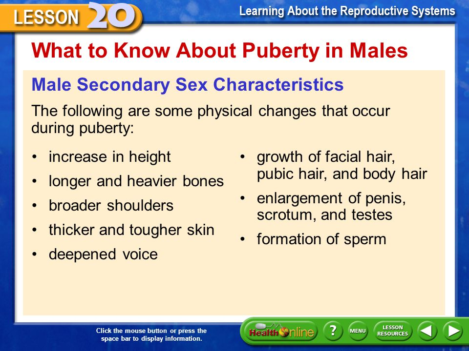 What to Know About Puberty in Males