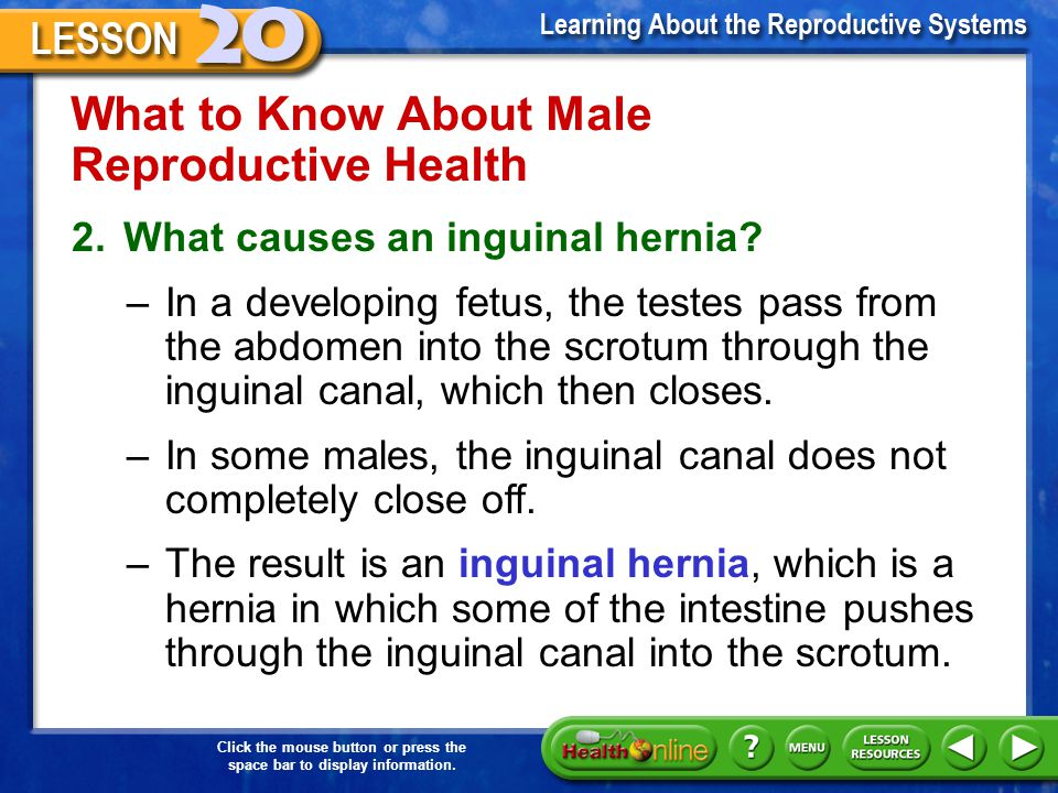 What to Know About Male Reproductive Health
