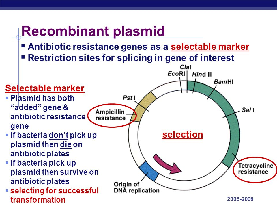 Recombinant plasmid Antibiotic resistance genes as a selectable marker