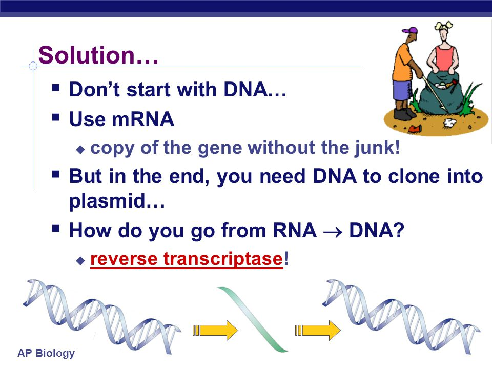 Solution… Don't start with DNA… Use mRNA
