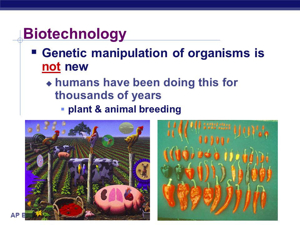Biotechnology Genetic manipulation of organisms is not new