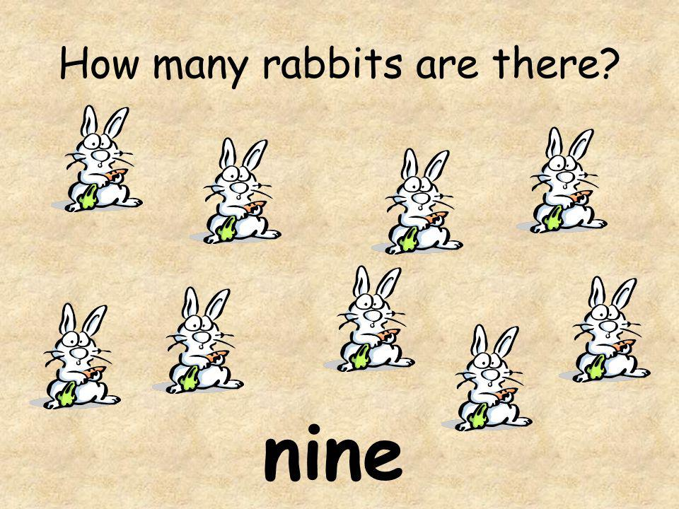 How many rabbits are there
