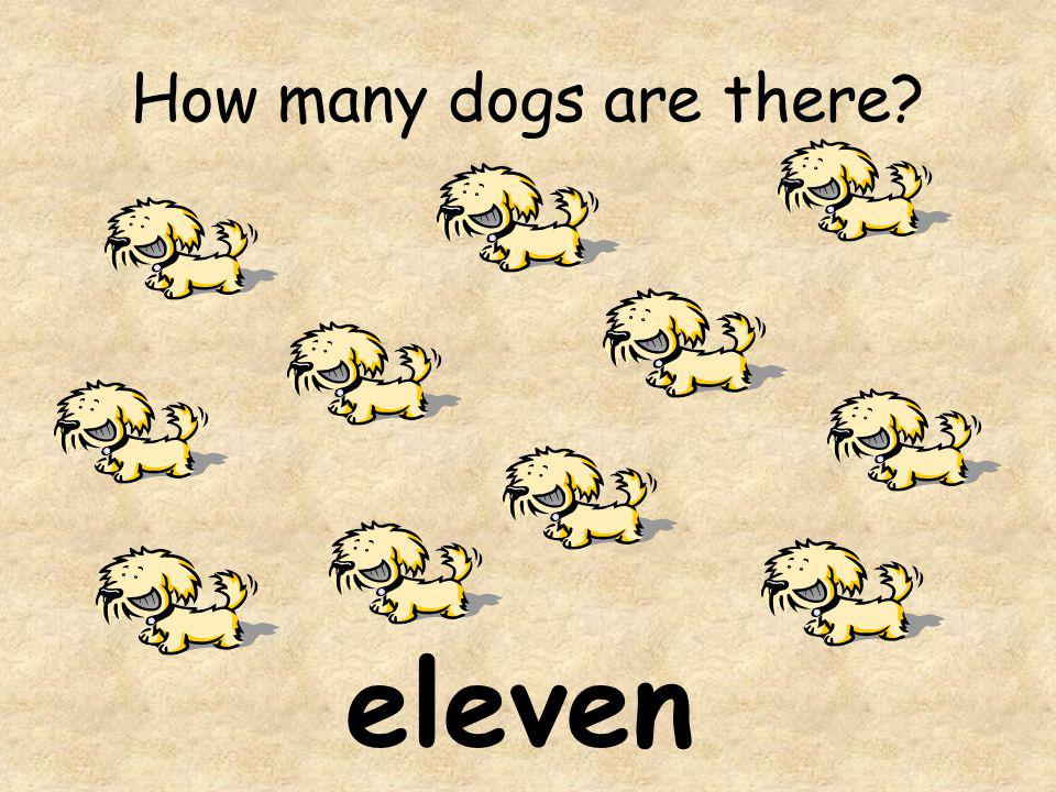 How many dogs are there eleven