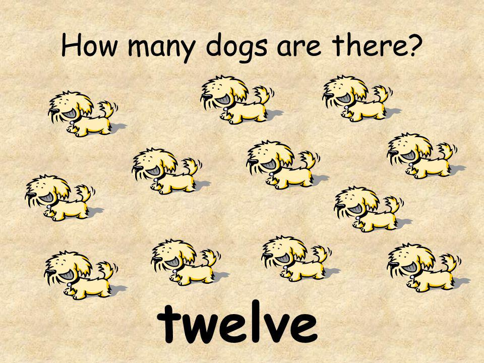 How many dogs are there twelve