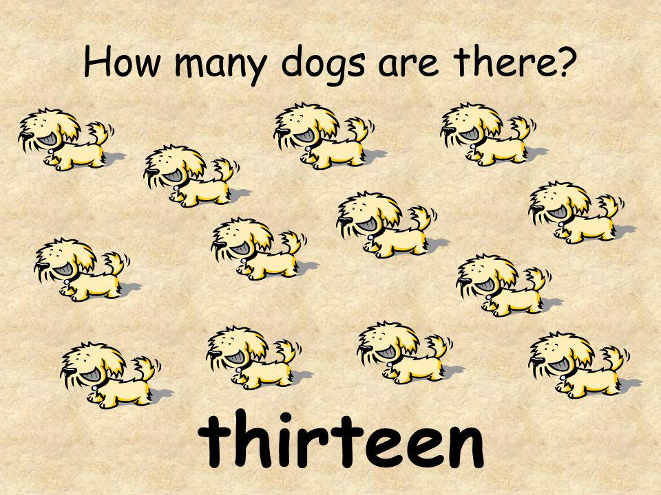 How many dogs are there thirteen