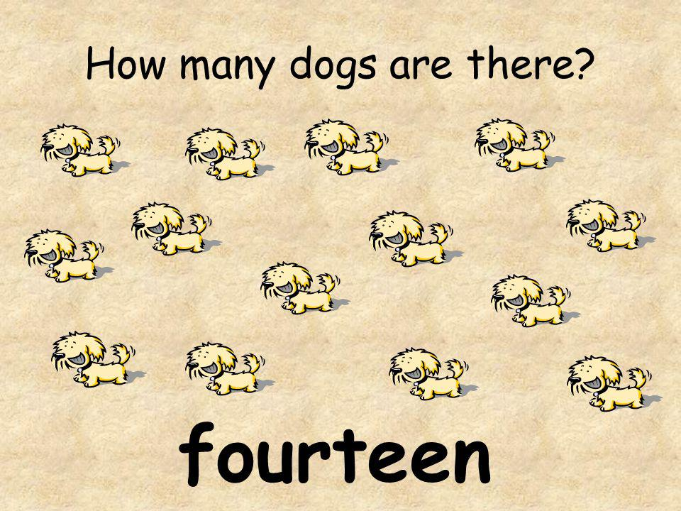 How many dogs are there fourteen