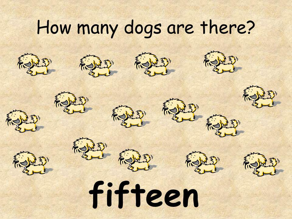 How many dogs are there fifteen