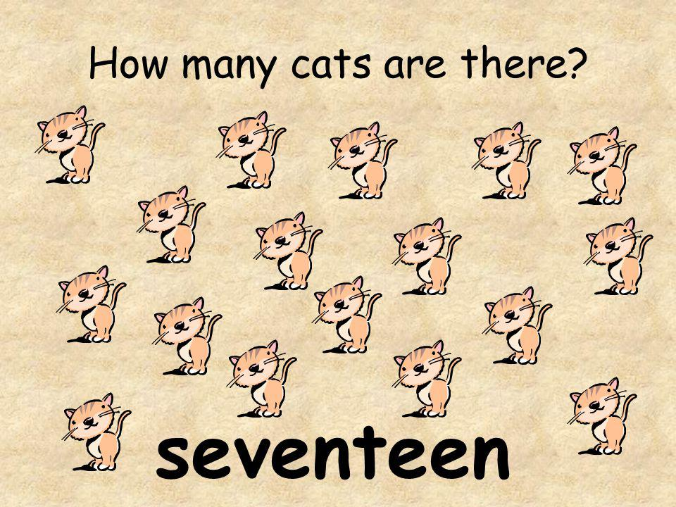 How many cats are there seventeen