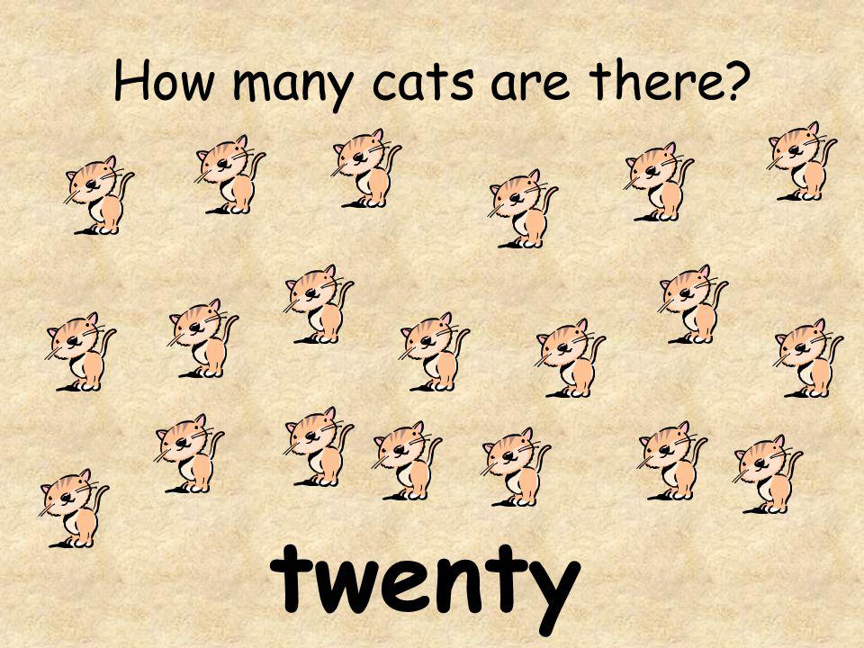 How many cats are there twenty