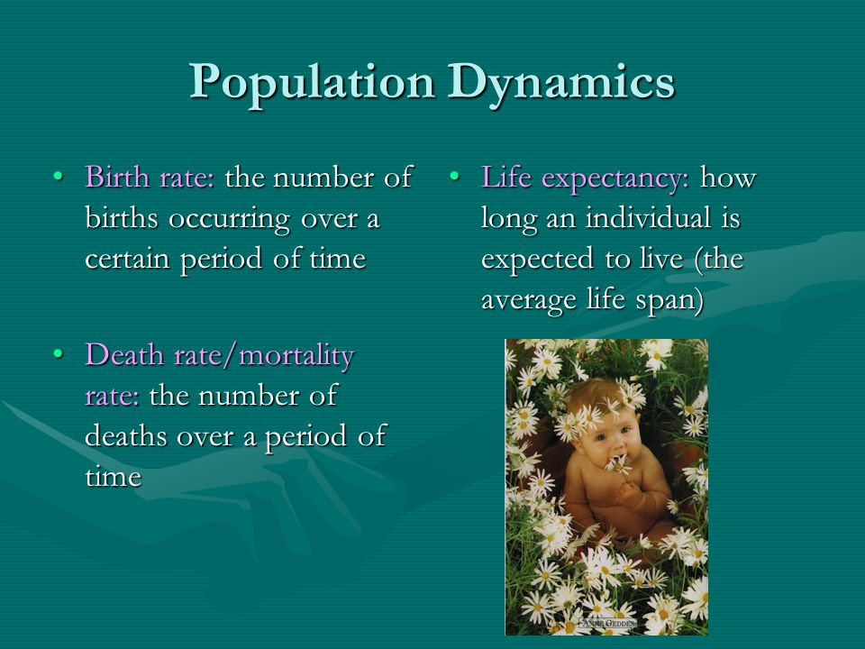 Population Dynamics Birth rate: the number of births occurring over a certain period of time.