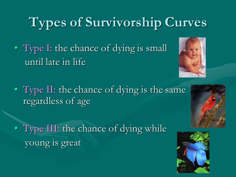 Types of Survivorship Curves