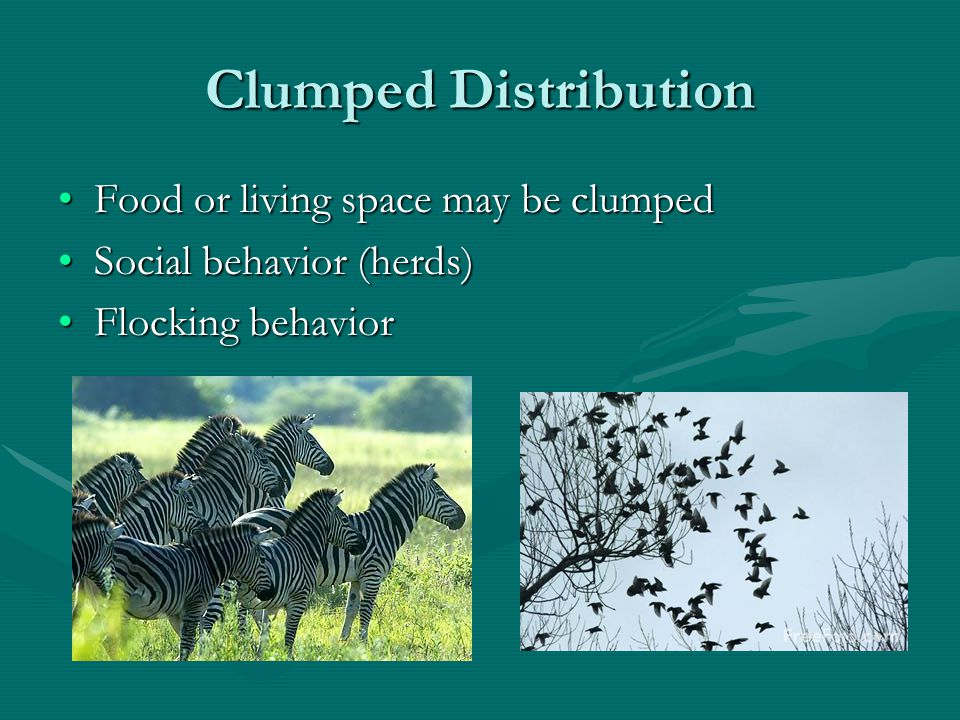 Clumped Distribution Food or living space may be clumped