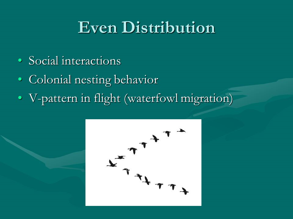 Even Distribution Social interactions Colonial nesting behavior