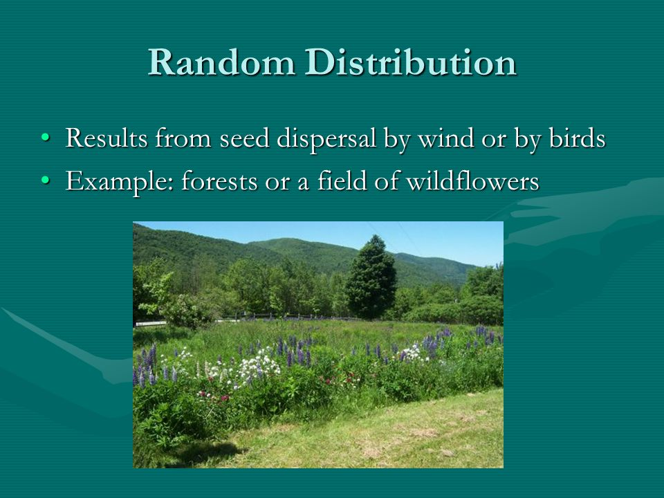 Random Distribution Results from seed dispersal by wind or by birds