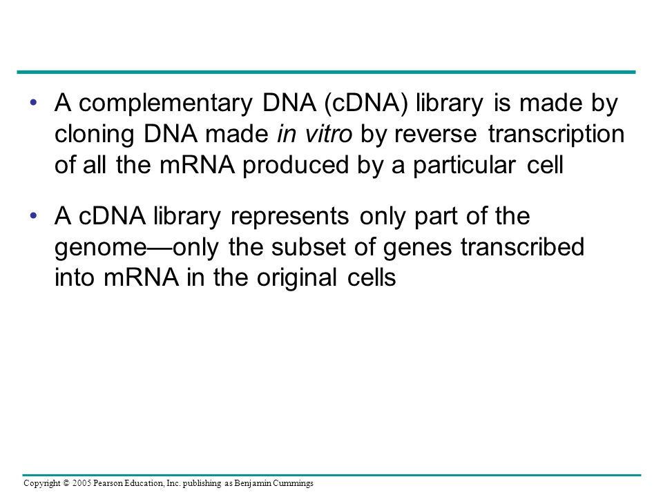 A complementary DNA (cDNA) library is made by cloning DNA made in vitro by reverse transcription of all the mRNA produced by a particular cell