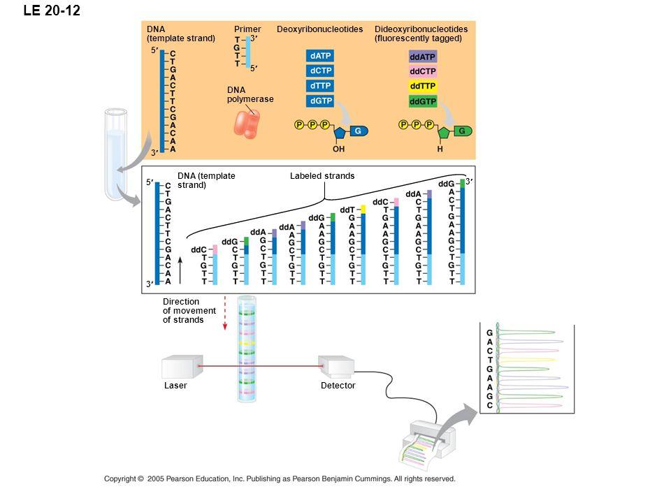 LE 20-12 DNA (template strand) Primer Deoxyribonucleotides