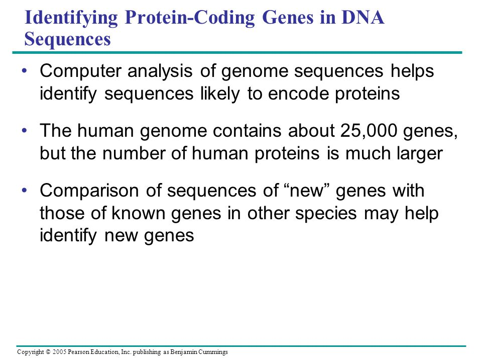 Identifying Protein-Coding Genes in DNA Sequences