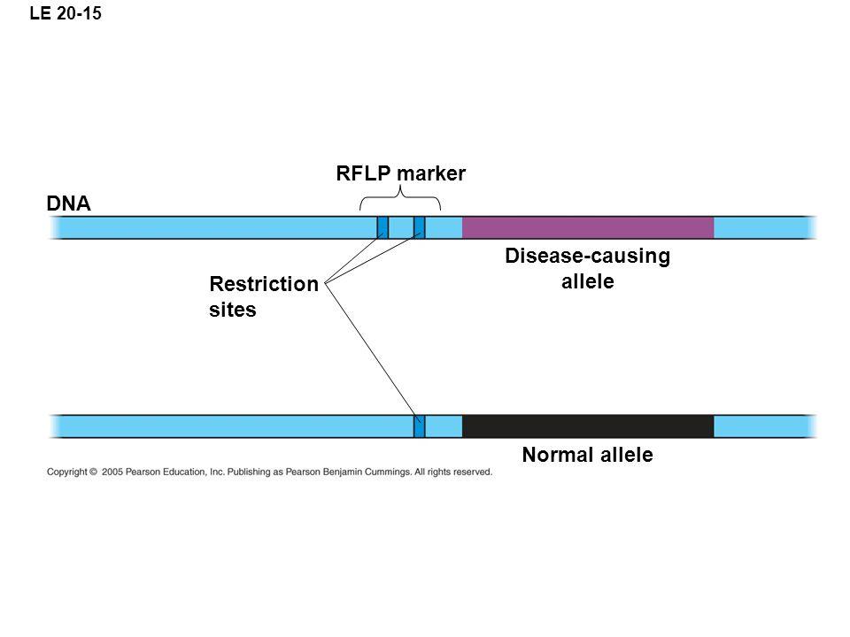 RFLP marker Disease-causing allele Normal allele