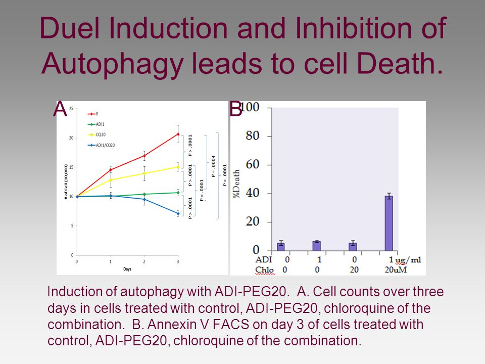 Duel Induction and Inhibition of Autophagy leads to cell Death.