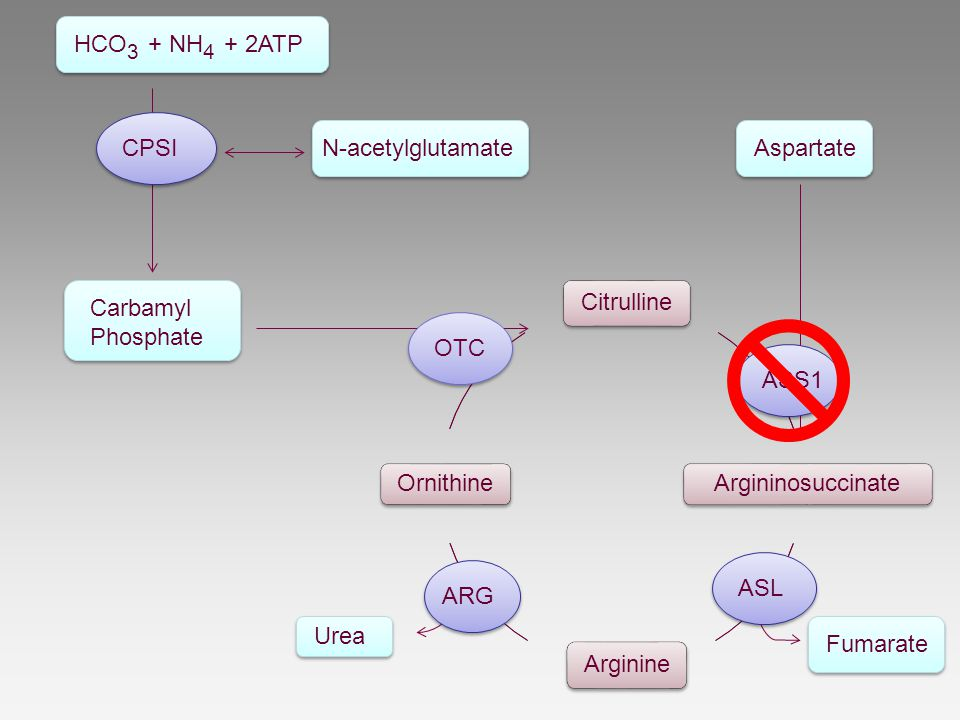 HCO3 + NH4 + 2ATP Carbamyl. Phosphate. N-acetylglutamate. CPSI. Argininosuccinate. ASS1. Aspartate.