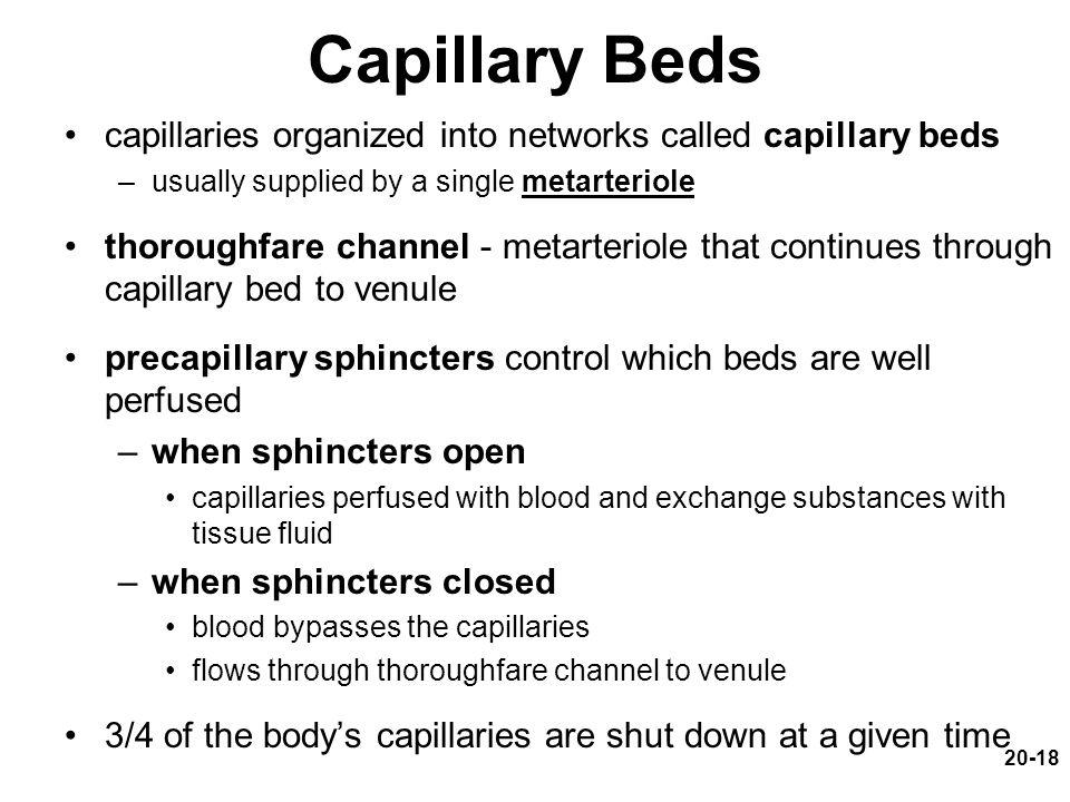 Capillary Beds capillaries organized into networks called capillary beds. usually supplied by a single metarteriole.