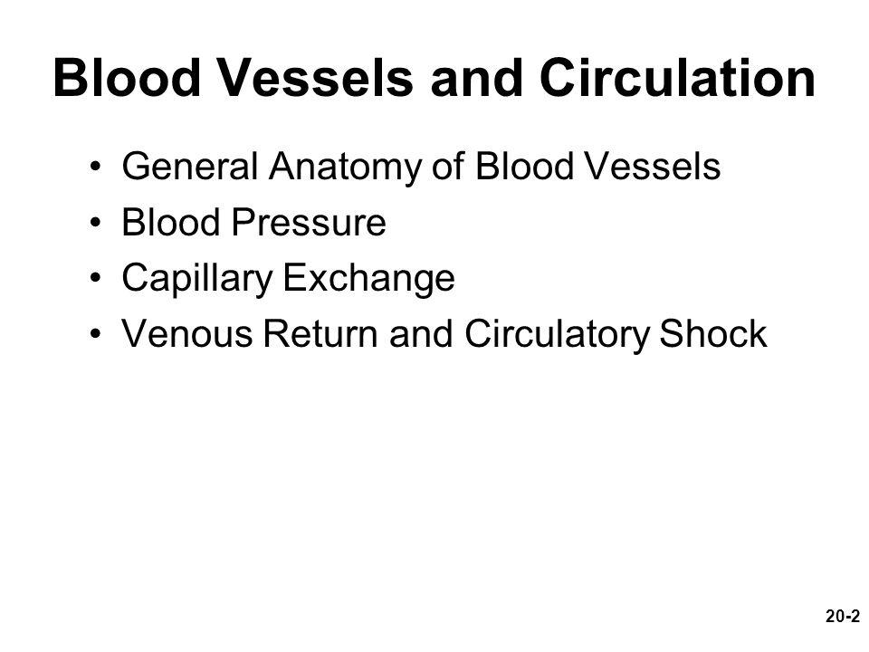 Blood Vessels and Circulation