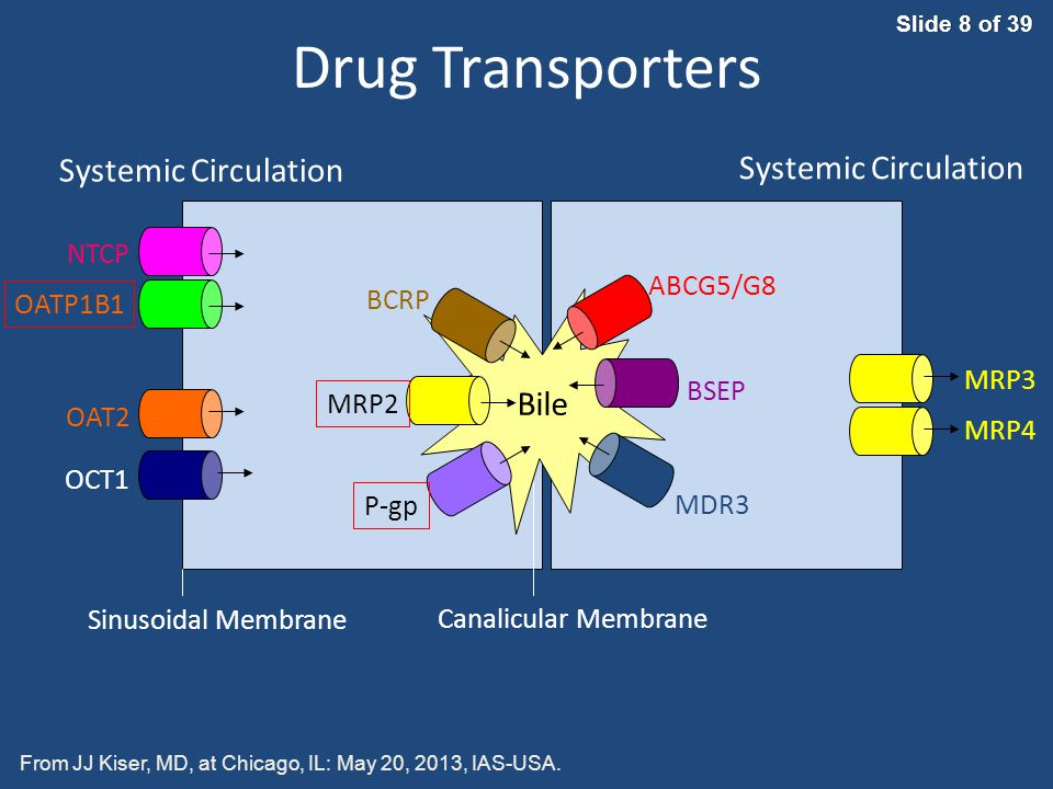 Drug Transporters Systemic Circulation NTCP ABCG5/G8 BCRP OATP1B1 MRP3