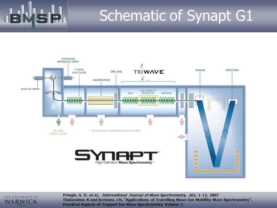 Schematic of Synapt G1 Pringle, S. D. et al., International Journal of Mass Spectrometry, 261, 1-12, 2007.