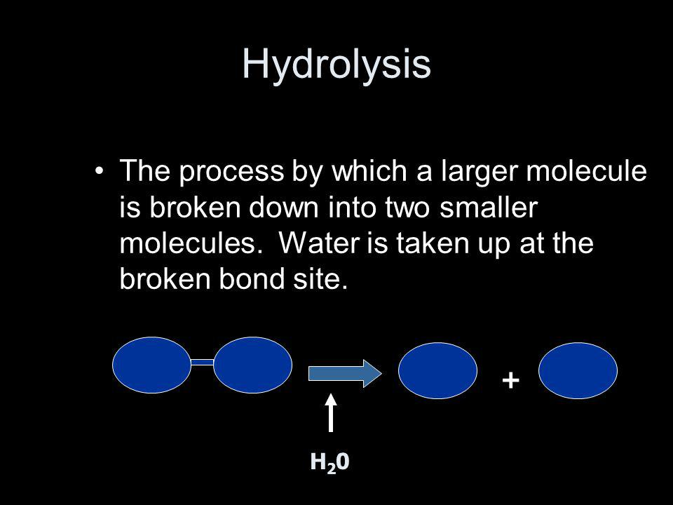 Hydrolysis The process by which a larger molecule is broken down into two smaller molecules. Water is taken up at the broken bond site.