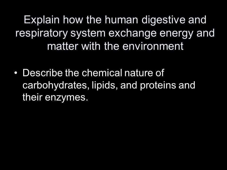 Explain how the human digestive and respiratory system exchange energy and matter with the environment