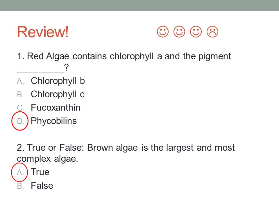 Review!     1. Red Algae contains chlorophyll a and the pigment _________ Chlorophyll b. Chlorophyll c.