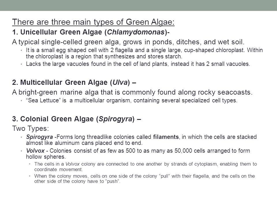 There are three main types of Green Algae: